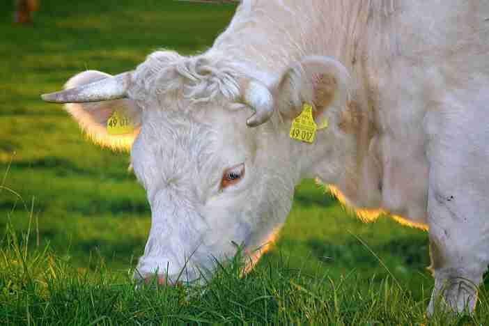 BIO potraviny je souhrnné označení pro potraviny ze surovin (rostlinného nebo živočišného původu), které byly vyprodukovány v rámci ekologického zemědělství.