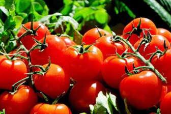 Jako potravinová alergie je označována nepřiměřená imunitní reakce organismu na potraviny.